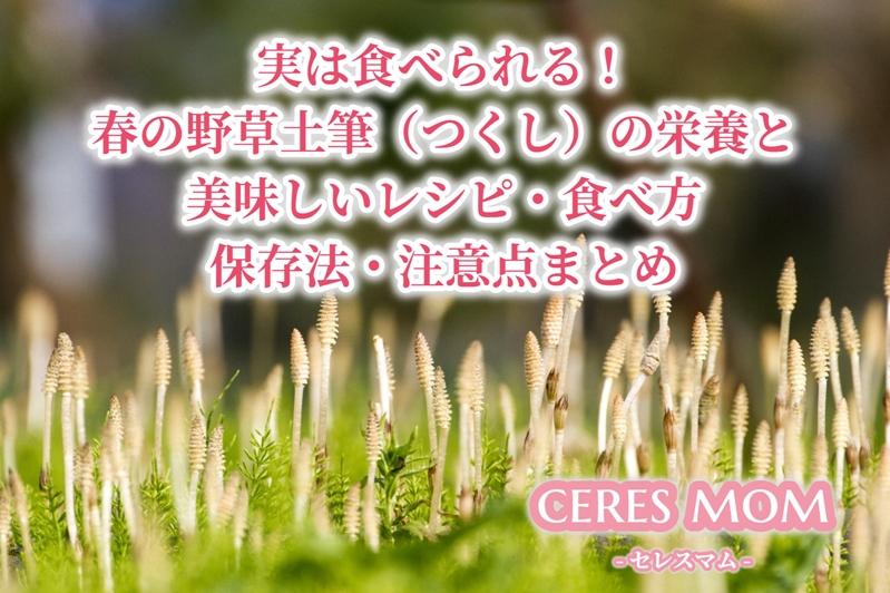 実は食べられる!春の野草土筆(つくし)の栄養と美味しいレシピ・食べ方 保存法・注意点まとめ