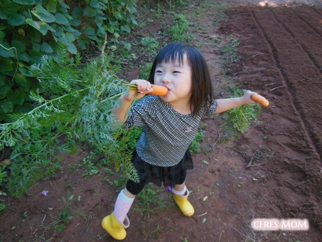 自然栽培のにんじん